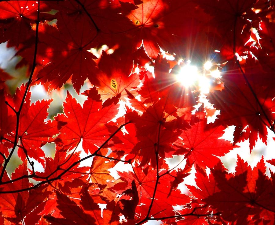 Les merveilles de l'automne