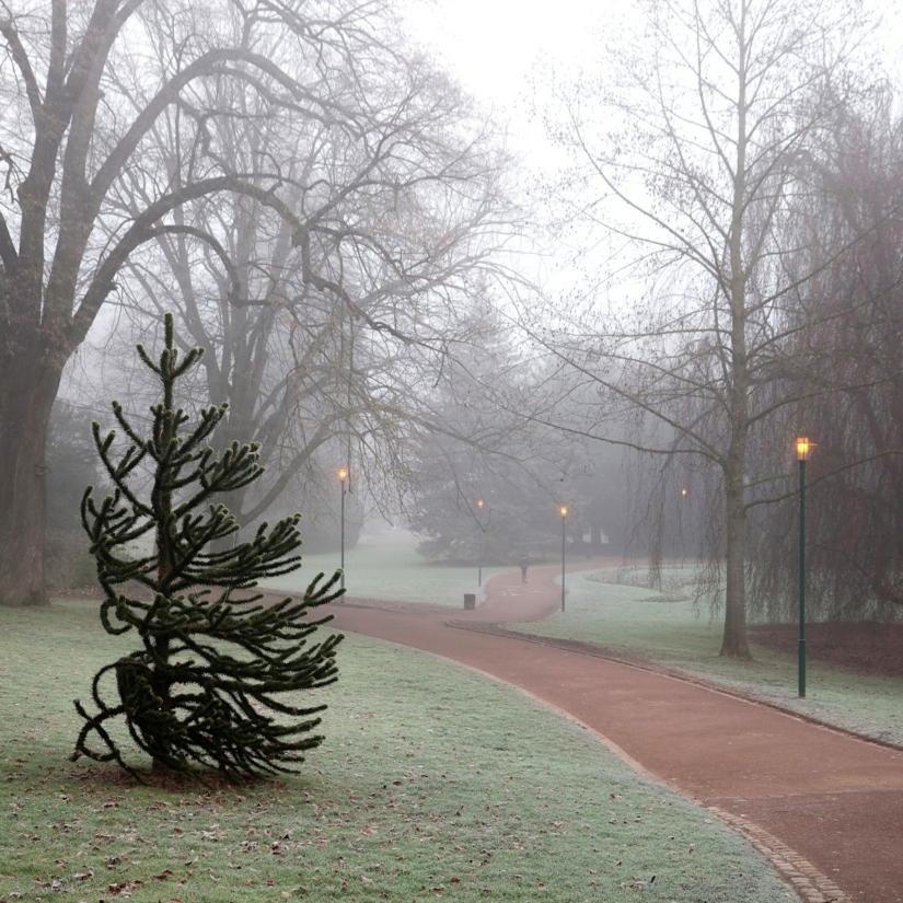 Promenade dans un parc en hiver